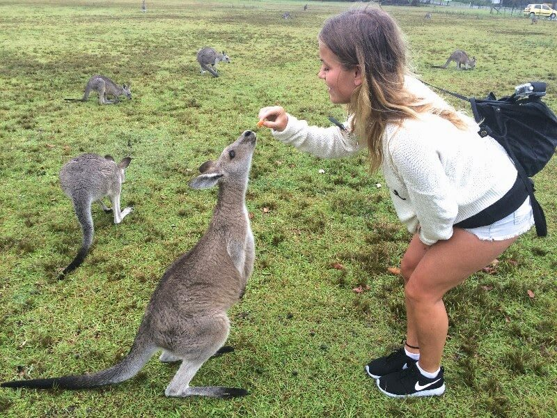 If You Want to See Kangaroos in the Wild in Australia Come ...