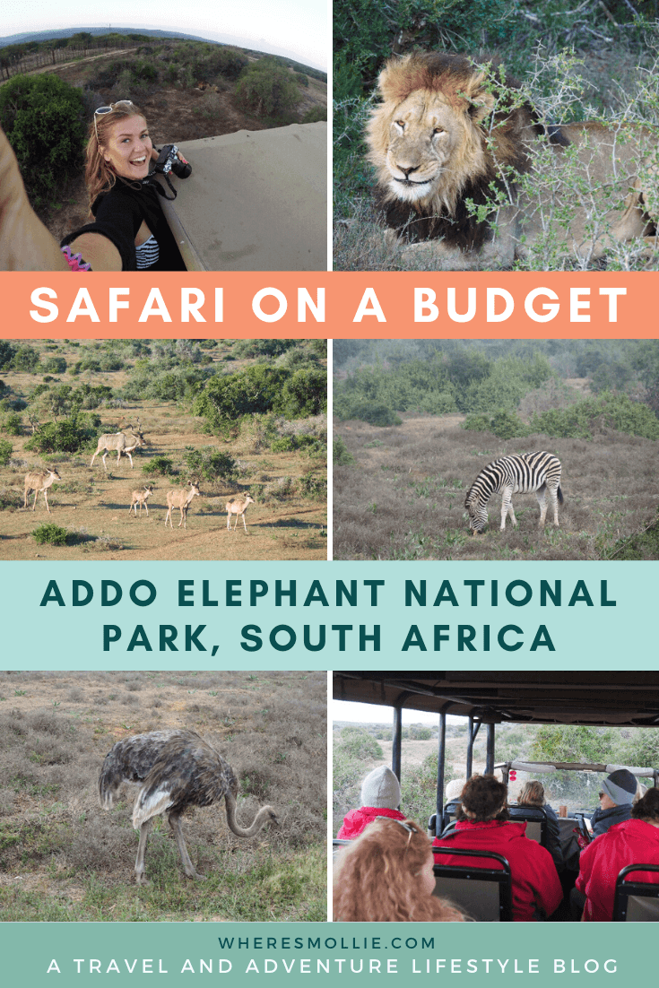 A budget safari at Addo National Park, South Africa