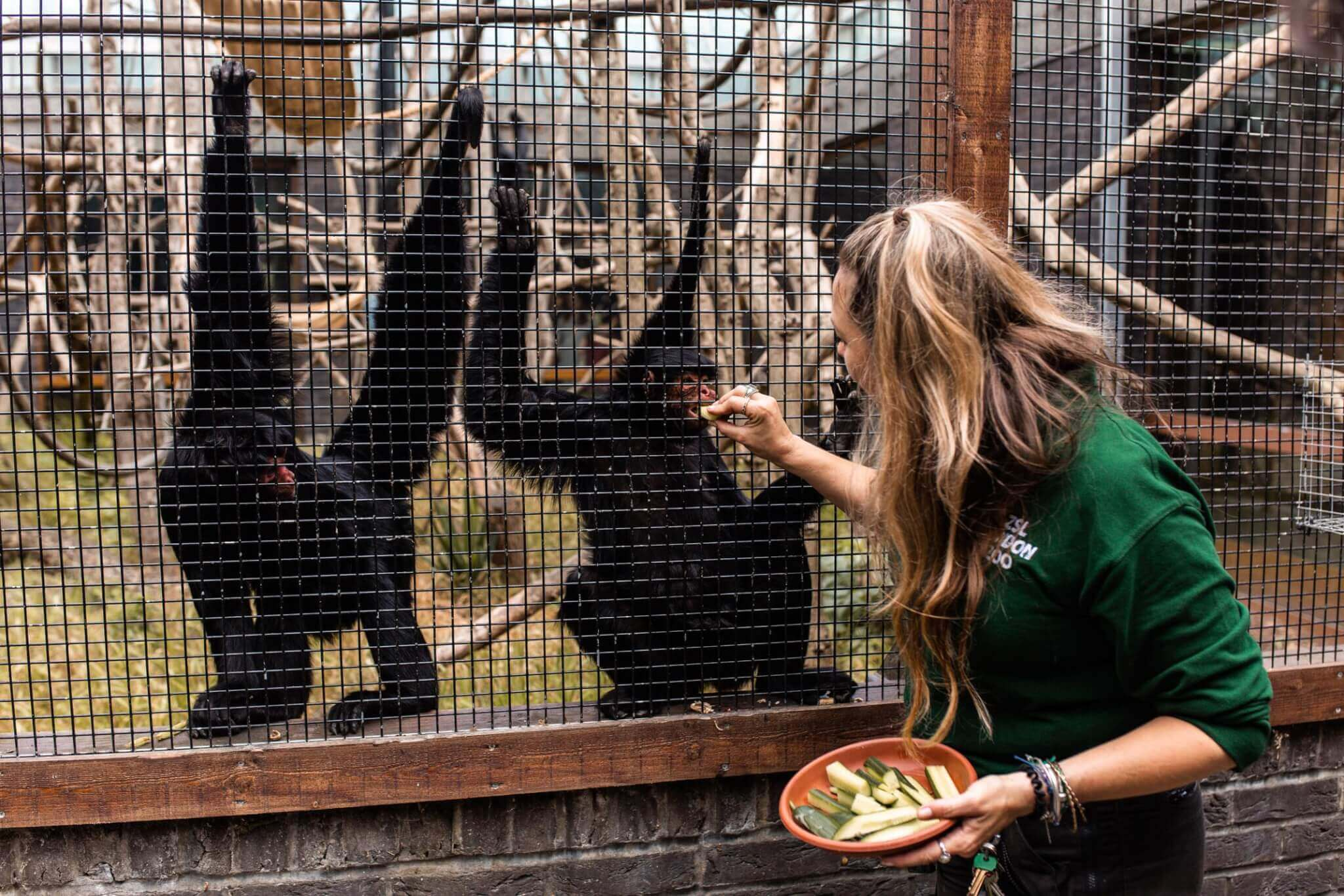 'KEEPER FOR A DAY' EXPERIENCE AT LONDON ZOO | Where's Mollie? A travel and adventure lifestyle blog