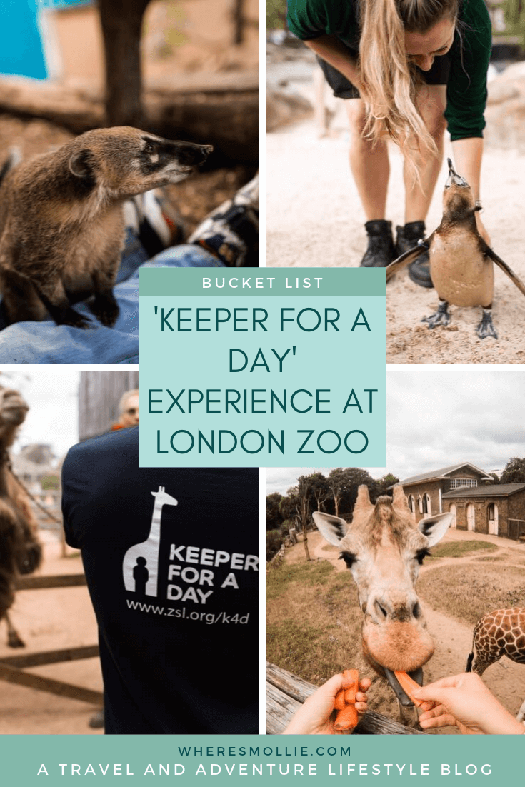 'Keeper for a day' experience at London Zoo