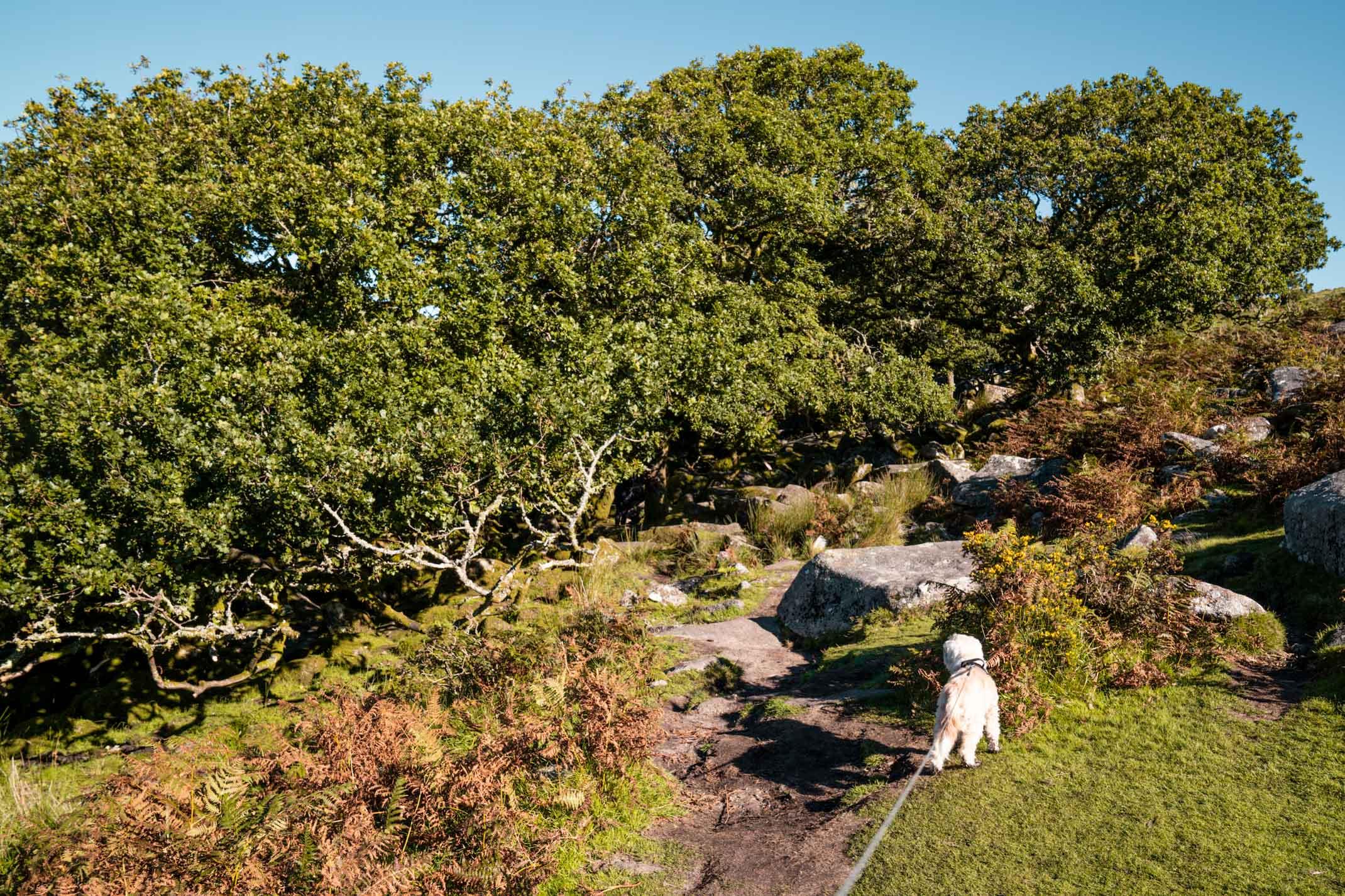 A guide to exploring Dartmoor National Park, Devon
