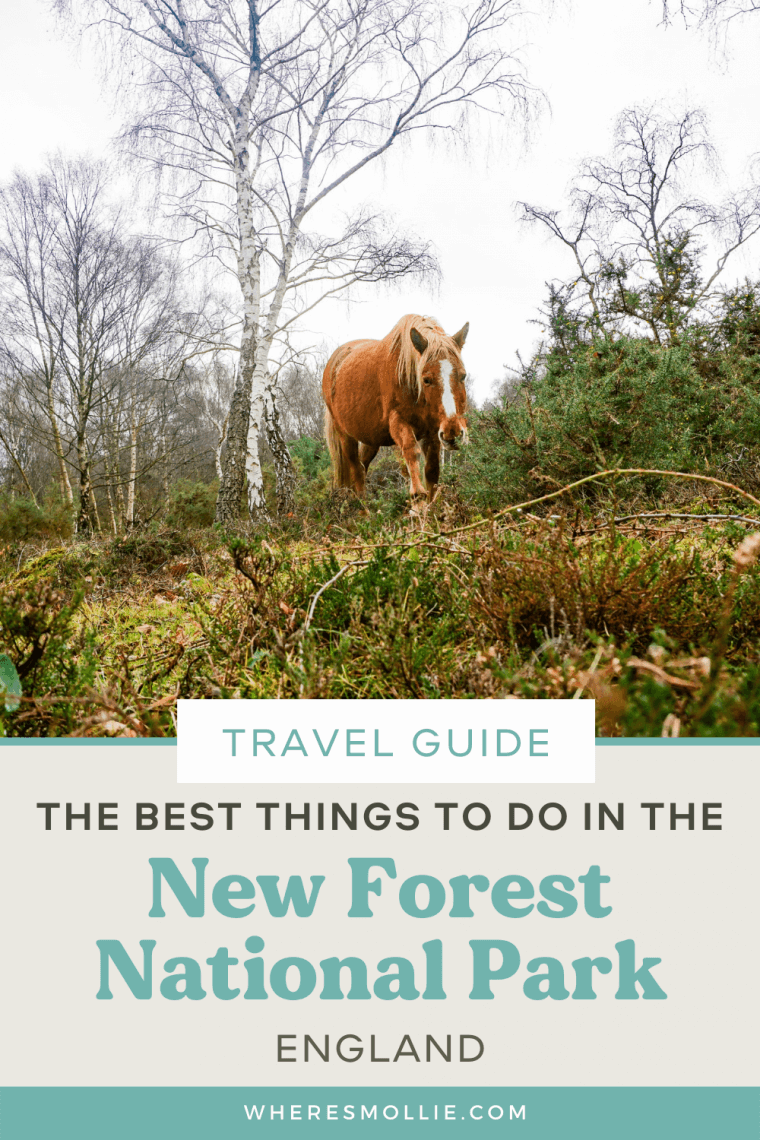 The best things to do in the New Forest National Park, England